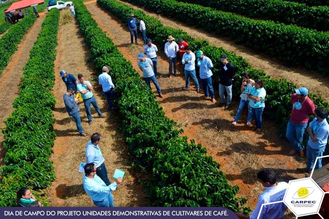 Dia de Campo do Projeto Unidades Demonstrativas de Cultivares de Café.